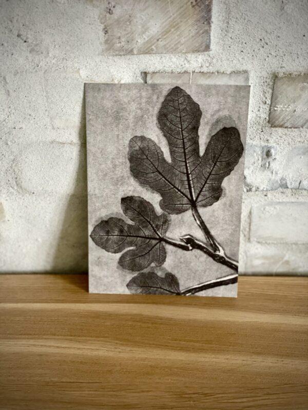Kunstkort Fig Charcoal
